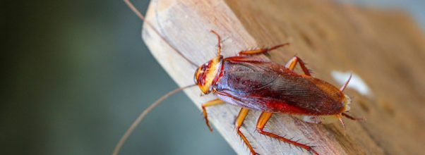 cockroach treatment singapore